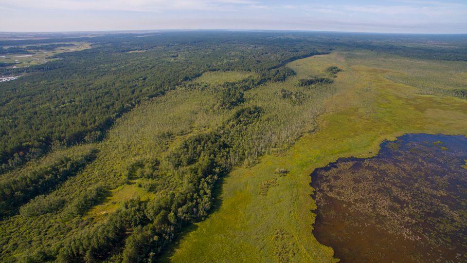 Леса Алтайского края