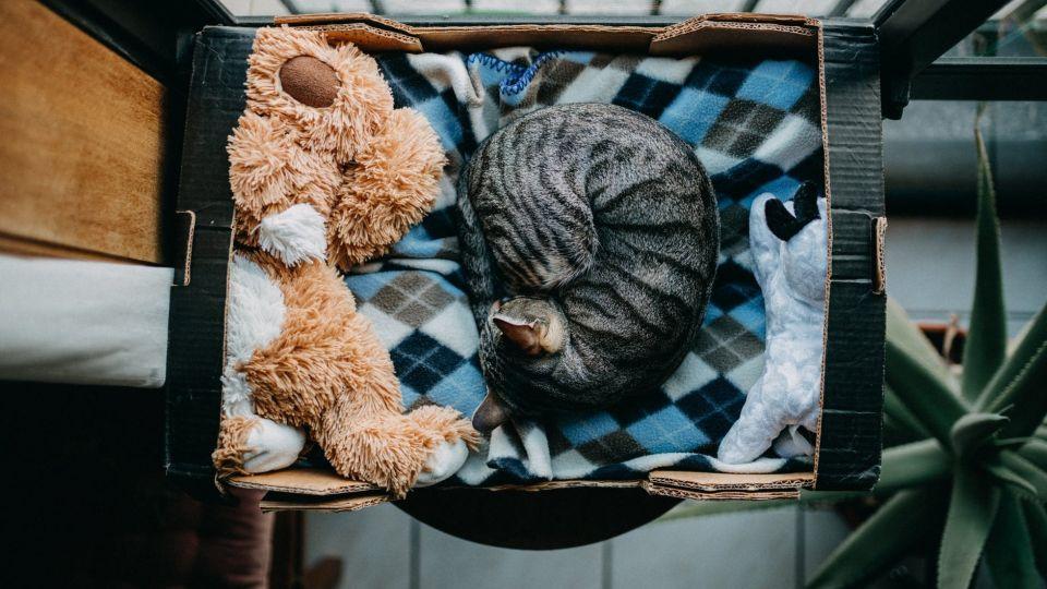 Кошка. Животные