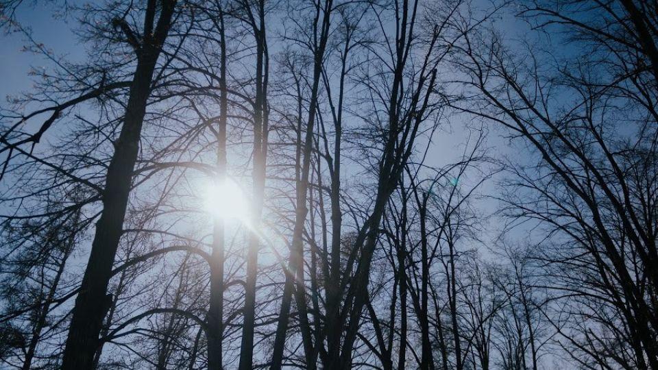 Солнце. Деревья