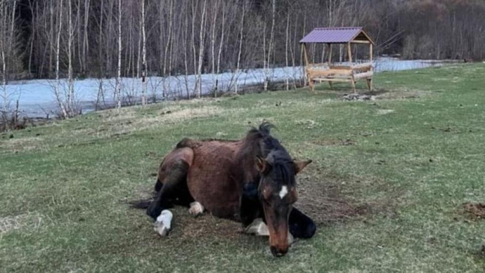 Лошадь, спасенная из Катуни
