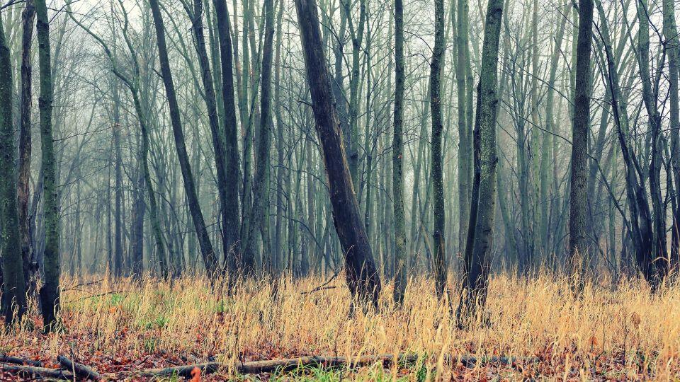 Лес. Болото. Деревья