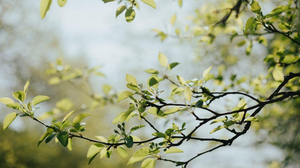 Весна. Погода