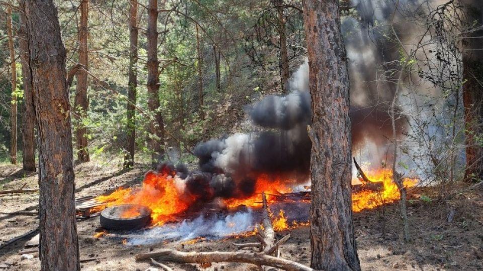 Лес. Пожар. Огонь