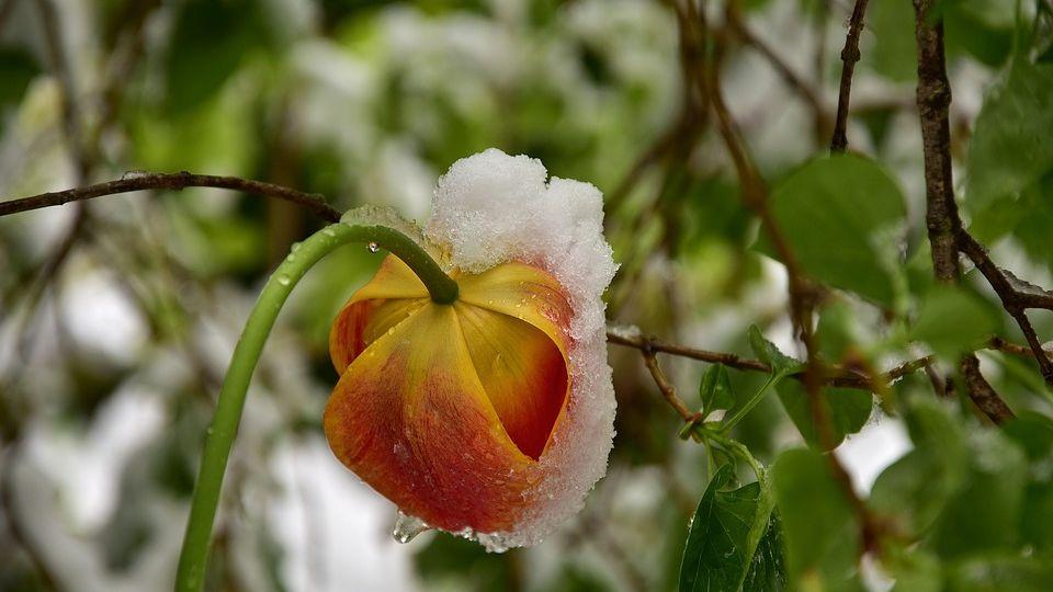 Снег. Похолодание