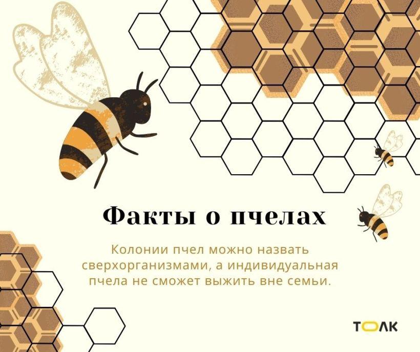 Факты о пчелах Фото:Мария Трубина