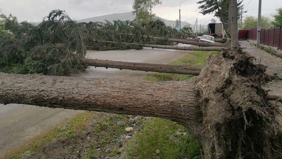 Деревья упали. Последствия ветра