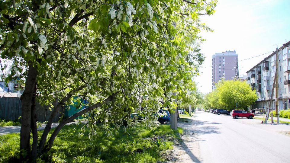 Барнаул. Весна
