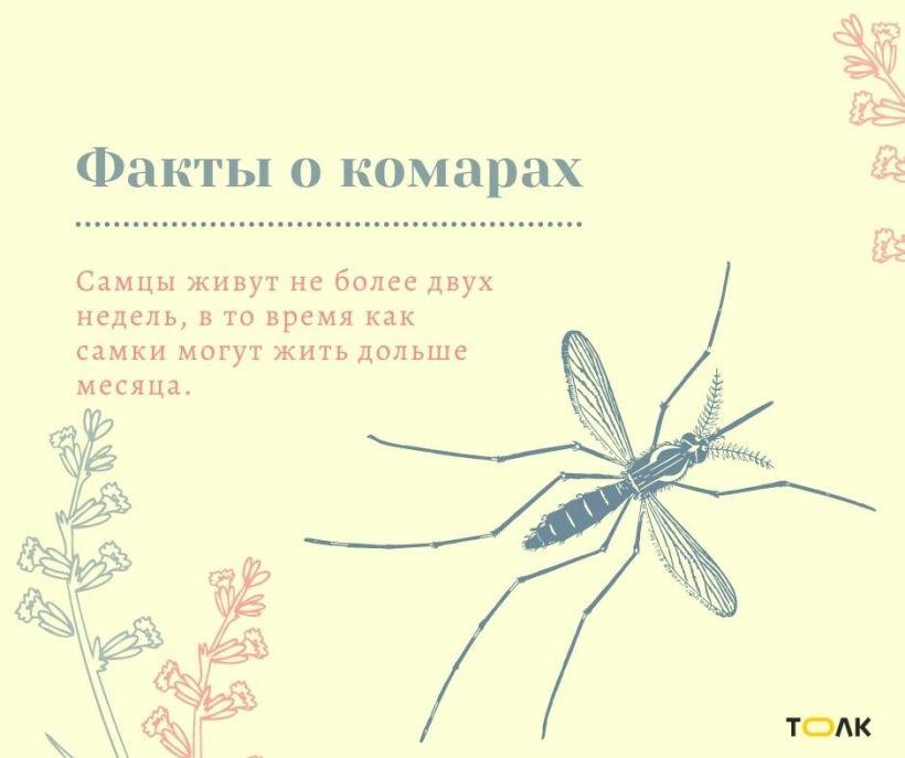 Факты о комарах Фото:Мария Трубина