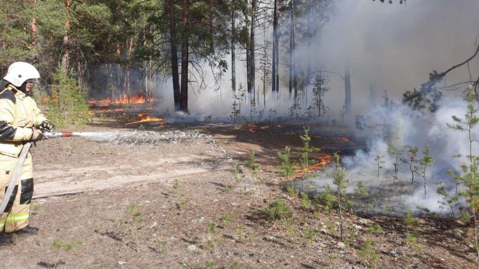 Лес. Пожар. Огонь. МЧС