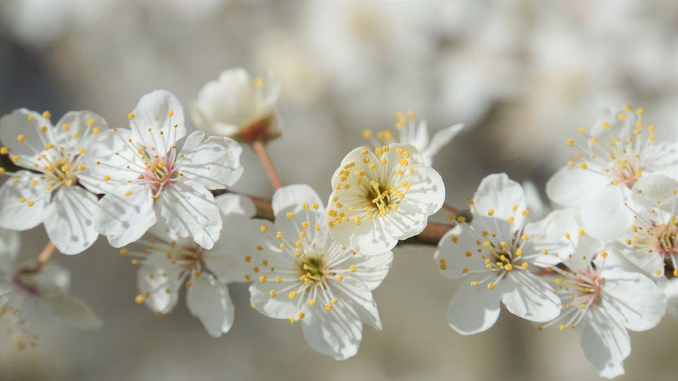 Яблоня. Цветы. Тепло