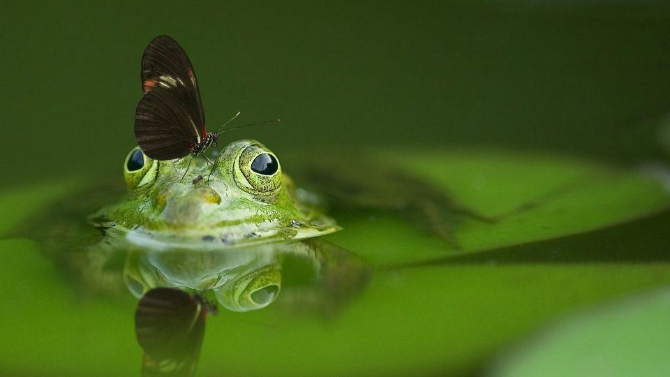 Лягушка. Природа. Животные