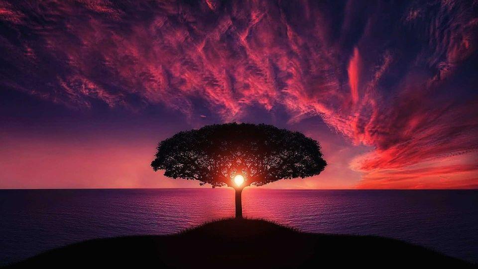 Закат. Солнце. Дерево