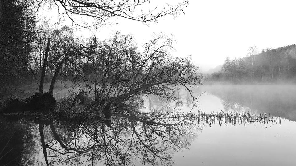 Деревья. Туман. Берег